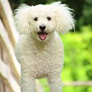 One Happy Dog by lorilee