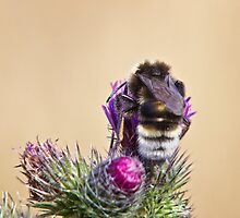 Bee Being Busy by Vicki Field