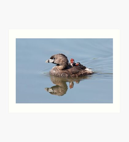 """""""Mom!...Timmy won't move over!"""" Pied-billed grebes Art Print"""