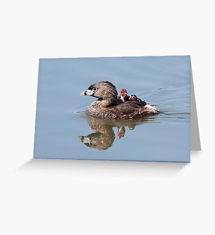 """Mom!...Timmy won't move over!"" Pied-billed grebes Greeting Card"