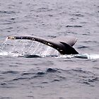 Humpback whale II by geophotographic