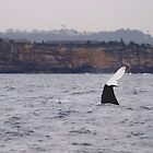 Whale tail I by geophotographic