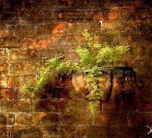 Asparagus Fern by Patito49