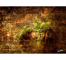 Asparagus Fern Photographic Print