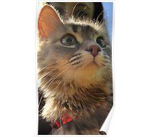 I am Eva hear me meow Poster