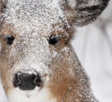 I hate snow! - White-tailed Deer Sticker