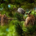 0428 Old Cones and New by DavidsArt