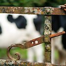 Cow &#x27;n Gate, Kilmokea Gardens, County Wexford, Ireland by Andrew Jones