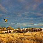 Sheep and Hot air Balloon. by Peter Hodgson
