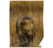 Grizzly Cub-Signed-#5126 Poster