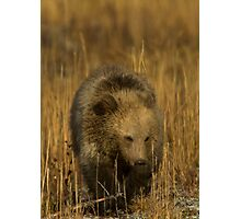 Grizzly Cub-Signed-#5126 Photographic Print