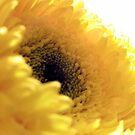 yellow gerbera by SarahTrangmar