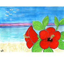 hibiscus by the sea Photographic Print