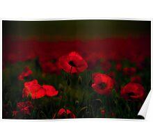 Poppy fields 5 Poster