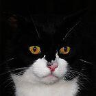 Meow..... by Josie Jackson