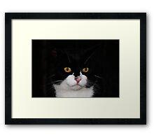 Meow..... Framed Print