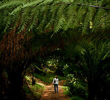 Amongst the ferns by Milla4