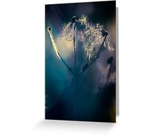 Colour of light Greeting Card