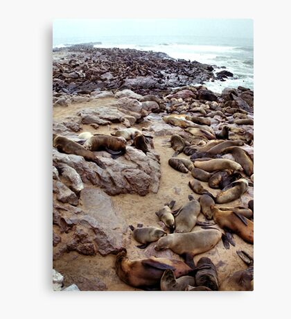 South African Fur Seal Colony Canvas Print