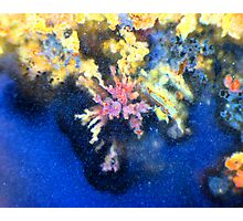 Dreaming Reef Photographic Print