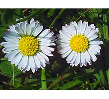 A pair of white spring flowers Photographic Print