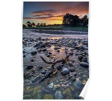 Pastel Dawn Driftwood Poster
