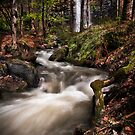 Alpine Stream by Mieke Boynton