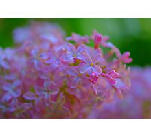 *** NATURALLY FRESH ~ SPRING LILAC **** Photographic Print
