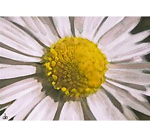 Daisy Watercolour Composition Photographic Print