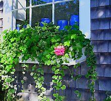 Windowbox in Provincetown by peterrobinsonjr
