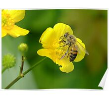 The Bee And The Buttercup Poster
