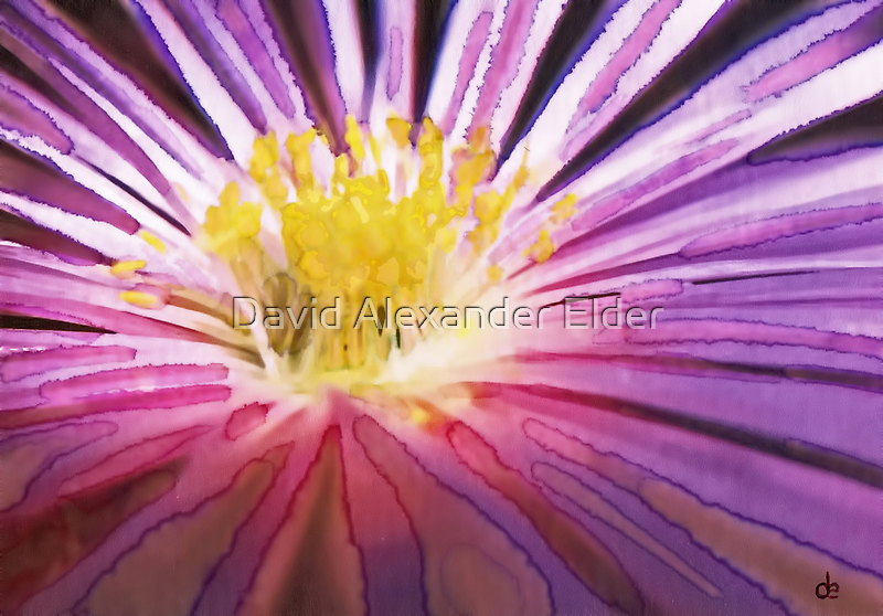 Purple Flower Watercolour by David Alexander Elder