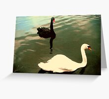 A Pairing of Swans Greeting Card