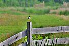 Redshank Fence by Jo Nijenhuis