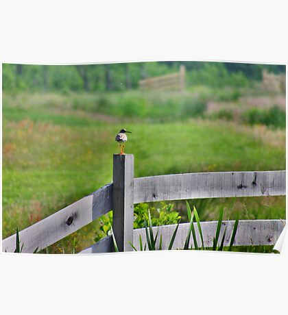 Redshank Fence Poster