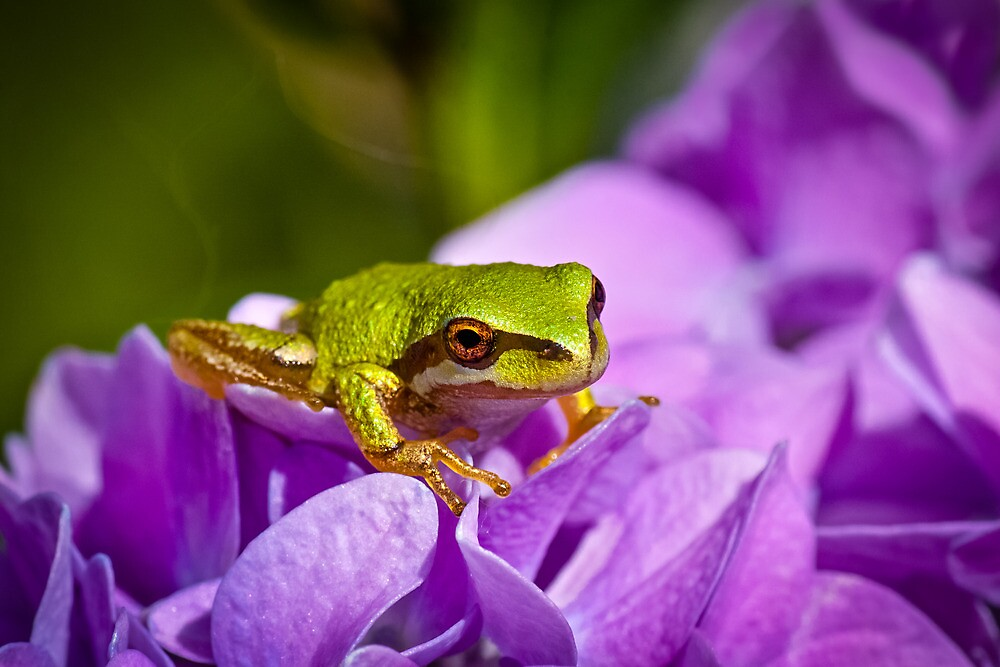 LITTLE GREEN FROG by Sandy Stewart