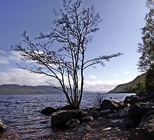 From the Shores of Loch Ness, Scotland by trish725
