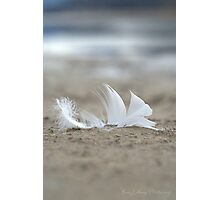 Purity Photographic Print