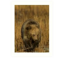 Grizzly Cub-Signed-#5126 Art Print