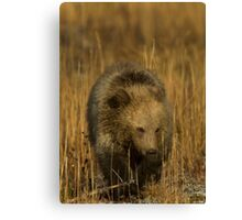 Grizzly Cub-Signed-#5126 Canvas Print