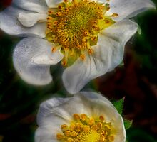 Strawberries in Bloom by Keri Harrish