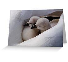 Twin swan babies Greeting Card