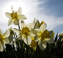 Spring in bloom by Ian Middleton