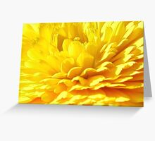 Golden Marigold  Greeting Card