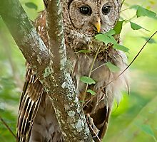 Peek a Boo Owl by Bonnie T.  Barry