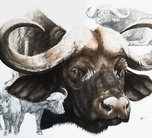 Cape Buffalo by BarbBarcikKeith