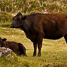 Mother and Calf by Jay Lethbridge