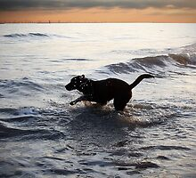 Labrador jumping from the sea by smikeymikey1