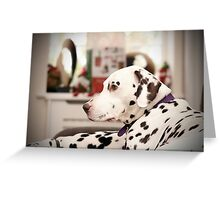 dalmatian relaxing at home Greeting Card