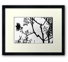 Birdie please don't go! 0656 Framed Print